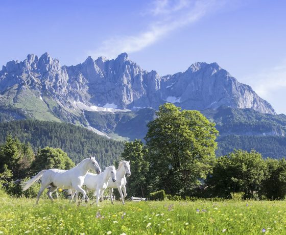 Photo Gallery - Stanglwirt Bio-Hotel - one of the best tennis resorts for your tennis holidays in Austria